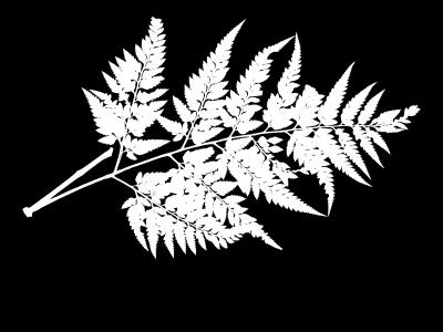 masked image of a fern herbarium sheet in black and white